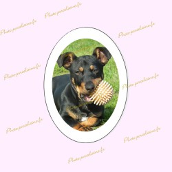 Photo porcelaine ovale verticale bordure blanche - Médaillon photo couleur Chiens