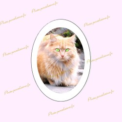 Photo porcelaine ovale verticale bordure blanche - Médaillon photo couleur Chats