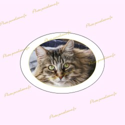 Photo porcelaine ovale horizontale filet or - Médaillon photo couleur Chats
