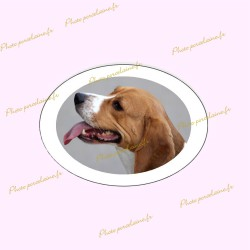 Photo porcelaine ovale horizontale bordure blanche - Médaillon photo couleur Chien