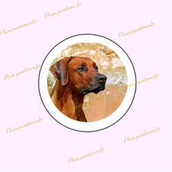 Photo porcelaine ronde bordure blanche - Médaillon photo couleur  Chien, Chats