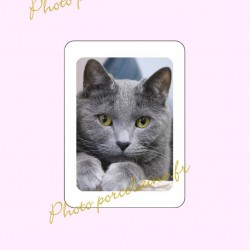 Photo porcelaine rectangle bordure blanche - Médaillon photo couleur Chats