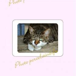 Photo porcelaine rectangle horizontale bordure blanche - Médaillon couleur Chats