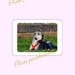 Photo porcelaine rectangle horizontale bordure blanche - Médaillon couleur Chien
