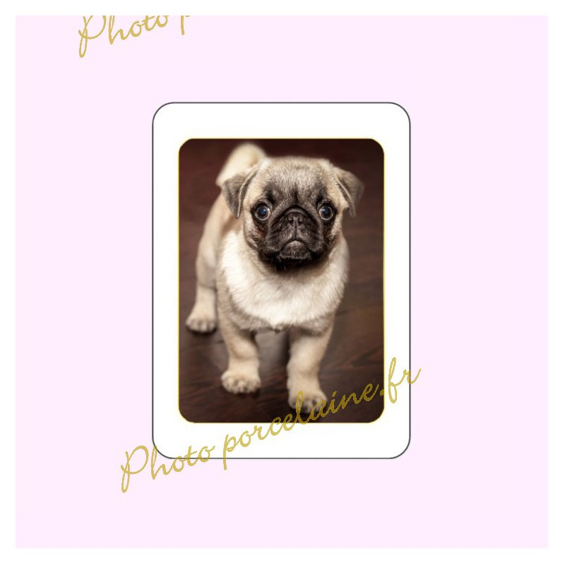 Photo porcelaine rectangle filet or - Médaillon photo couleur Chien