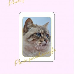 Photo porcelaine rectangle filet or - Médaillon photo couleur Chats