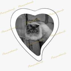 Photo porcelaine grand coeur bordure blanche - Médaillon photo noir et blanc Chats