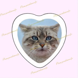 Photo porcelaine coeur bordure blanche - Médaillon photo couleur Chats