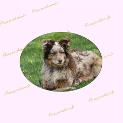 Photo porcelaine ovale horizontal - Médaillon photo couleur Chien