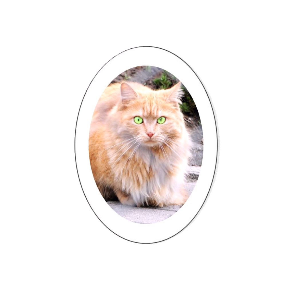 Médaillon PARIS 16 75016