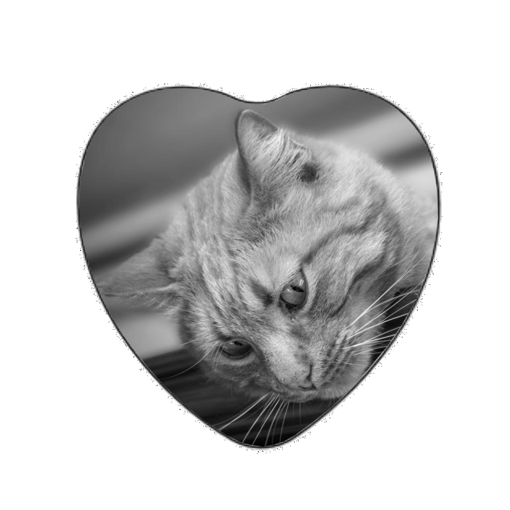 Médaillon photo ST BRICE 77160 porcelaine couleur petit coeur pour chien, chat...